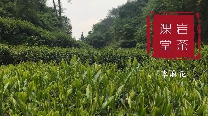 听说武夷水仙茶,比不上肉桂?