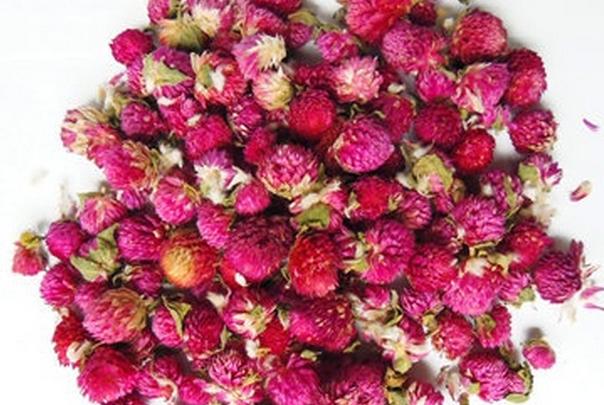 千日红花茶的功效与作用喝千日红花茶的注意事项