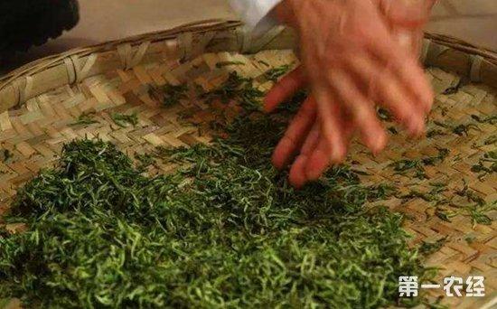 保健养生茶:用仙人掌茶治胃病的食用方法