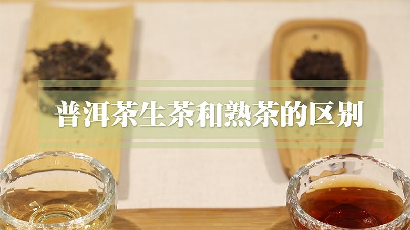 普洱茶熟茶和生茶的区别