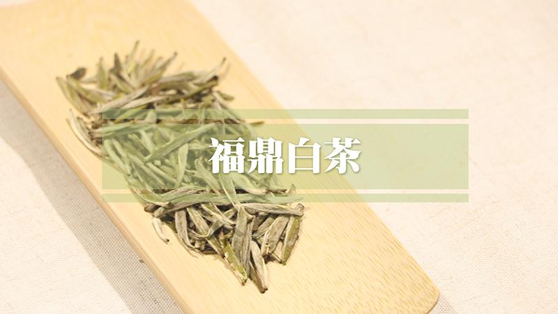 福鼎白茶属于什么茶