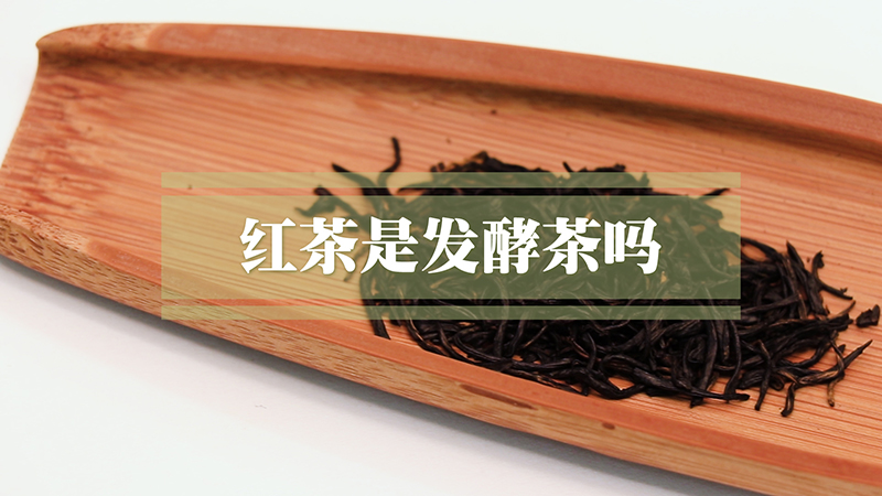 红茶是发酵茶