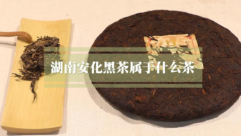 湖南安化黑茶属于什么茶