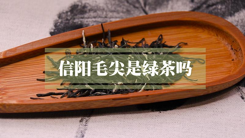 信阳毛尖属于绿茶吗