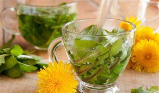 蒲公英茶怎么泡水喝,蒲公英泡水的正确用量