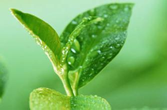常饮绿茶龙井茶的5大功效