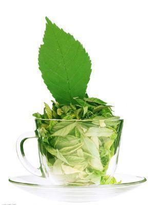 安吉白茶与其他绿茶相比功效的不同之处