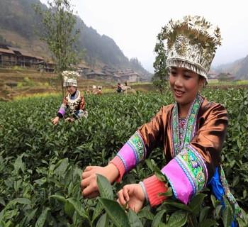 白茶的种类简述