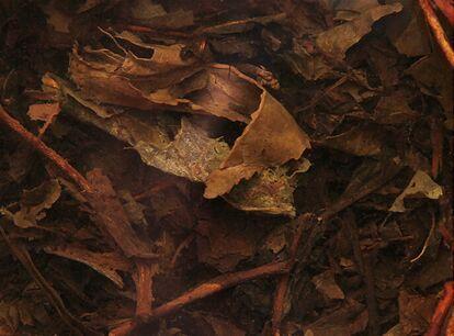 安化黑茶功效与作用有哪些?