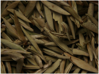 白茶的种类及价值功效