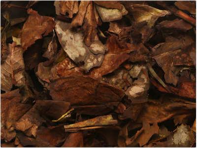 白茶的种类和功效介绍