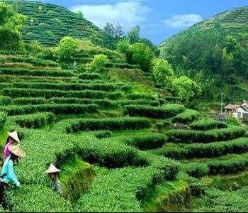 绿茶的冲泡方法六步走