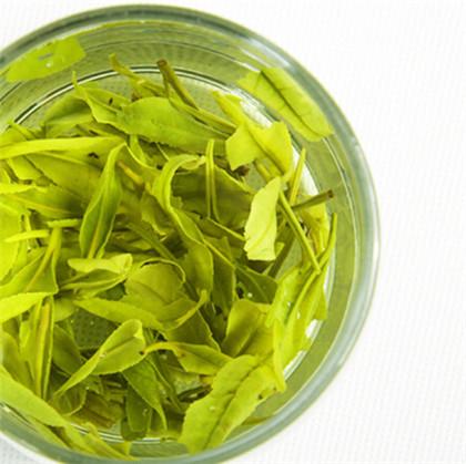 信阳毛尖是绿茶吗
