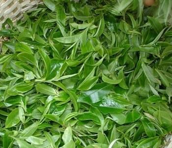 毛尖绿茶的种类和功效介绍
