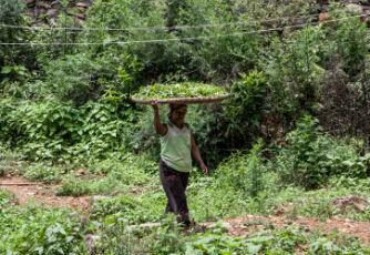 绿茶的种类和保存方法