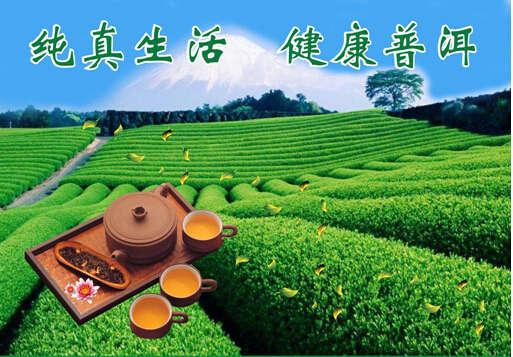 生普洱茶的价格