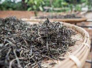 介绍黑茶的功效与作用