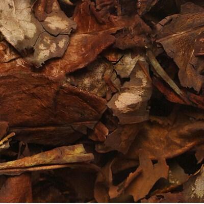 白茶种类的贡眉茶的简介