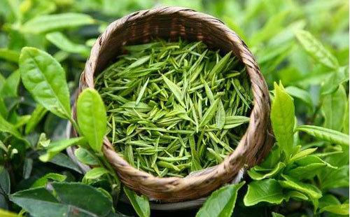 喝绿茶有什么用