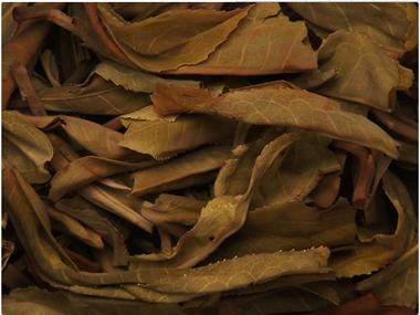 武夷山大红袍 中国名茶之一