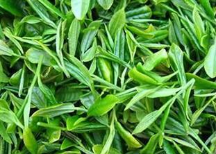 绿茶减肥效果好 及饮用注意事项