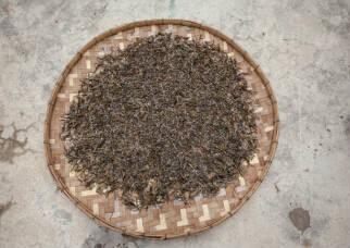 普洱茶珍藏版
