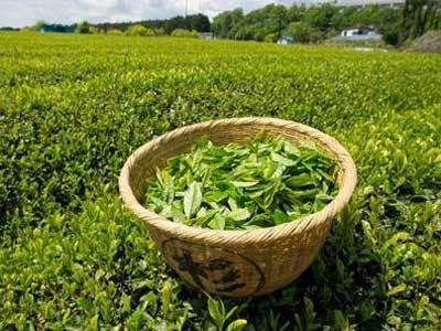 君山银针茶叶价格是多少?