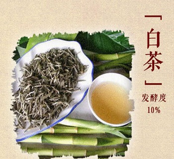 白茶和其他茶叶的不同点