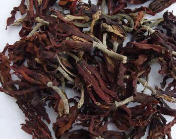 介绍:喝玉兰花茶有什么好处