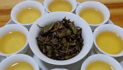 普洱茶是什么茶