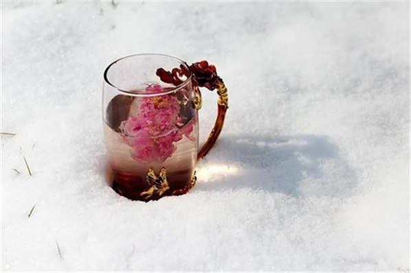 金边玫瑰花花茶功效与作用