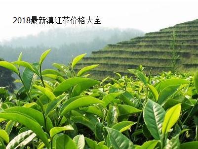 2018最新滇红茶价格大全
