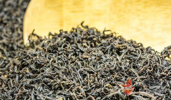 六堡茶怎么喝?——新手如何提高品鉴能力。