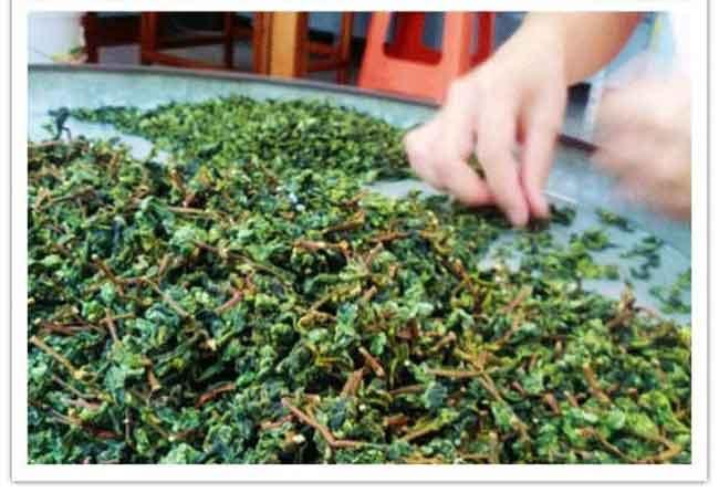 秋茶什么时候上市,铁观音秋茶的品质特点介绍