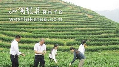 """""""茶祖之地""""炎陵打造""""万阳红""""红茶品牌"""