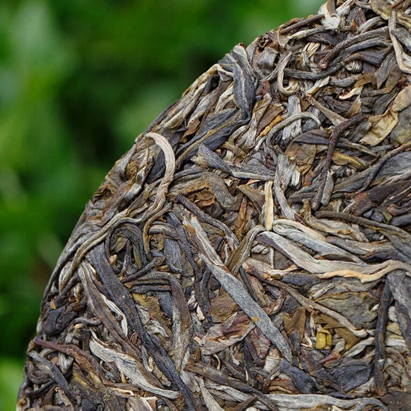 普洱茶生茶采摘及传统加工工艺流程
