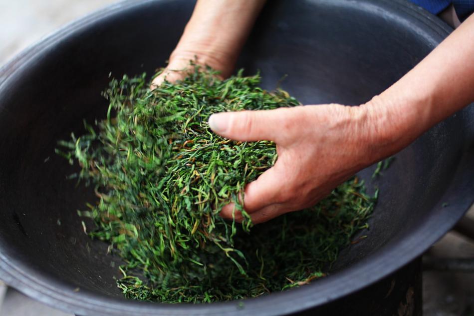 茶叶的制作过程介绍