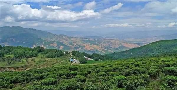 十点识茶:滇红,澜沧江边出来的一朵奇葩