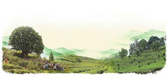 """凤庆:""""世界著名滇红之乡""""的畅想"""