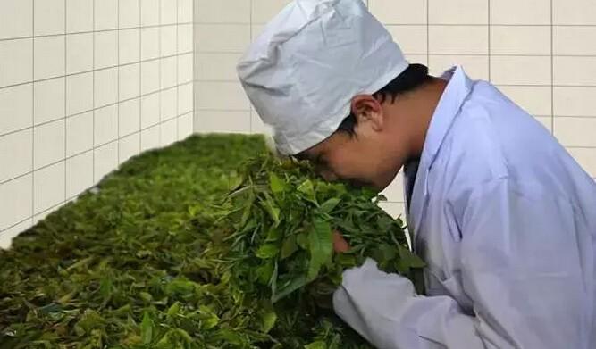 滇红茶制作篇——萎凋