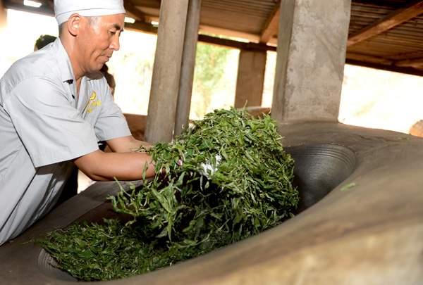 专家解读普洱茶原料的加工工艺