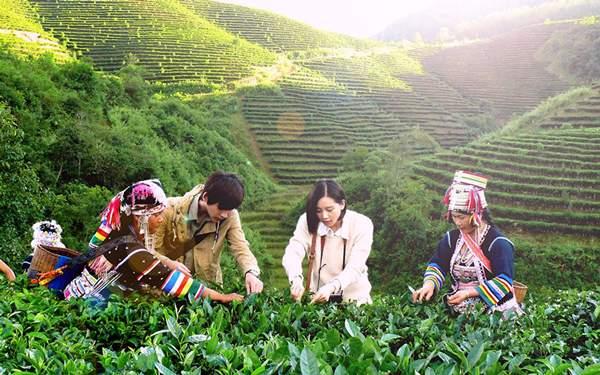 普洱茶产业概况:历史与现状