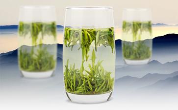 安吉白茶的八大茶叶知识