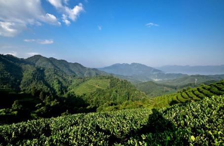 成年茶园的常规土壤耕锄技术要点茶园怎样合理用药?