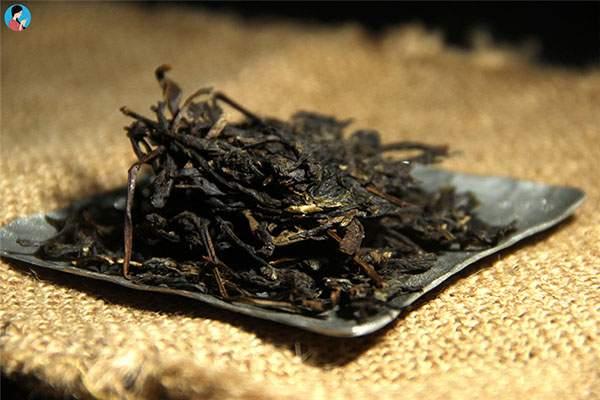 勐海县野生茶树资源申遗启动仪式侧记:留给世界的野生茶香