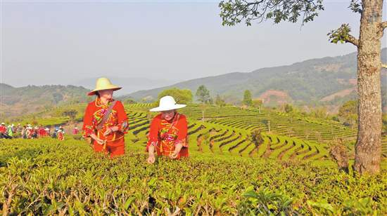 大益时代:核心技术领跑中国茶产业发展