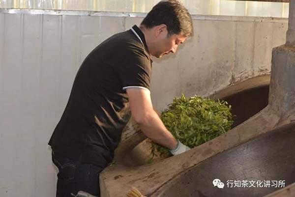 马哲峰:莽枝山国有林寻茶记