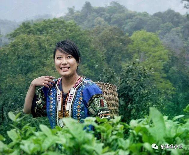 普洱茶与民族文化