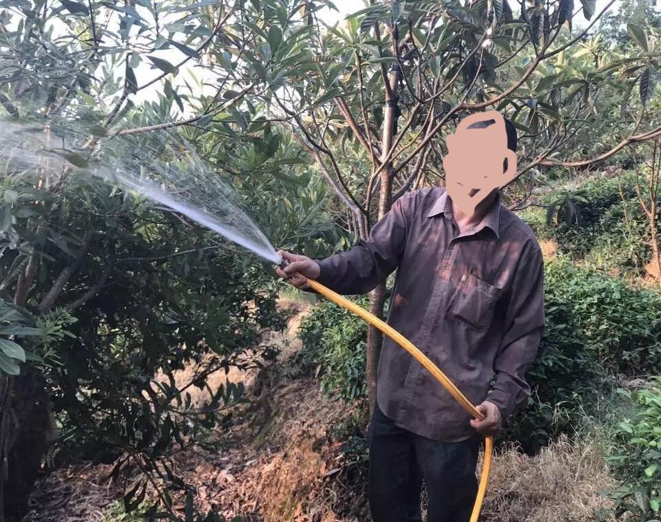 2018年碧螺春新茶产量预计会减产