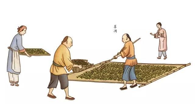 祁门红茶初制和精制完整制作工艺流程(精华)